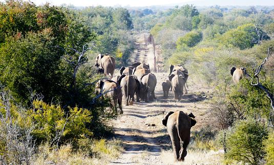 Poaching - Animal Welfare「Herd of elephants in Madikwe Game Reserve, South Africa」:スマホ壁紙(5)