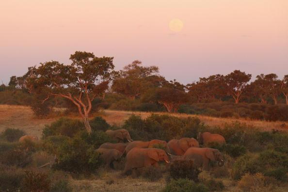 Botswana「An African Safari」:写真・画像(3)[壁紙.com]