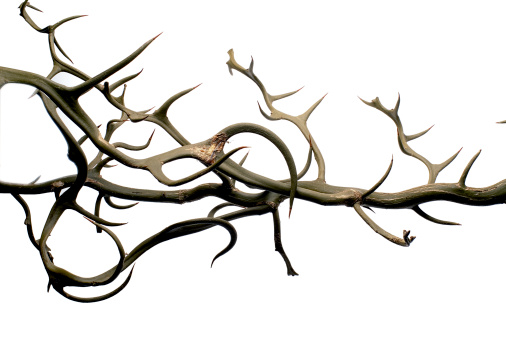 とげのある「Thorns」:スマホ壁紙(19)