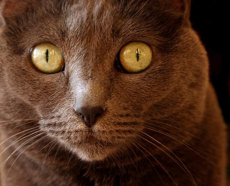 Iris - Eye「Big Eyes」:スマホ壁紙(15)