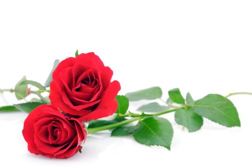 Valentine's Day「に赤いバラホワイト、コピースペース付き」:スマホ壁紙(8)