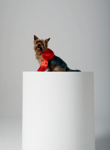 Winning「Dog on a pedestal, wearing red ribbon」:スマホ壁紙(17)