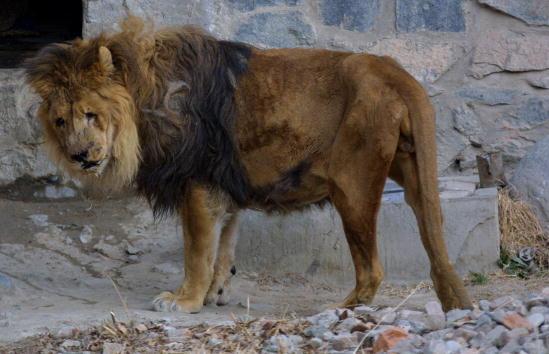 Kabul「Kabul Zoo」:写真・画像(16)[壁紙.com]