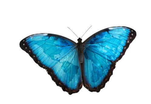 Central America「World map on butterfly wings」:スマホ壁紙(17)