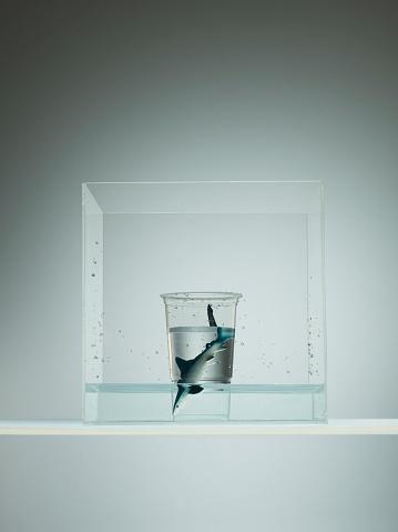 イルカ「Plastic sea creatures amongst plastic cups」:スマホ壁紙(18)