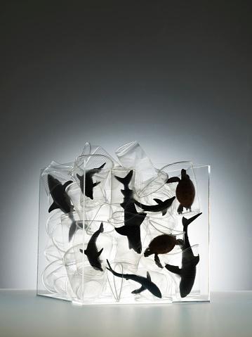 イルカ「Plastic sea creatures amongst plastic cups」:スマホ壁紙(19)