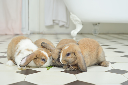 Baby Rabbit「Bunny on expidition」:スマホ壁紙(0)