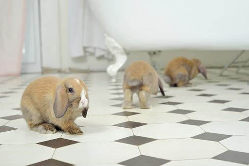 Baby Rabbit「Bunny on expidition」:スマホ壁紙(4)