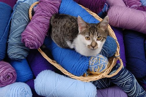 子猫「Blue / Purple Shades of Yarn with Kitten」:スマホ壁紙(2)