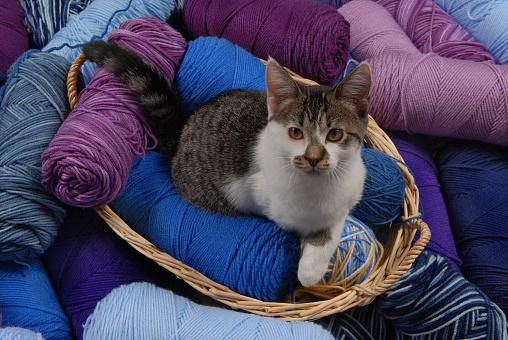 子猫「Blue / Purple Shades of Yarn with Kitten」:スマホ壁紙(3)