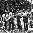 Cherokee National Forest壁紙の画像(壁紙.com)