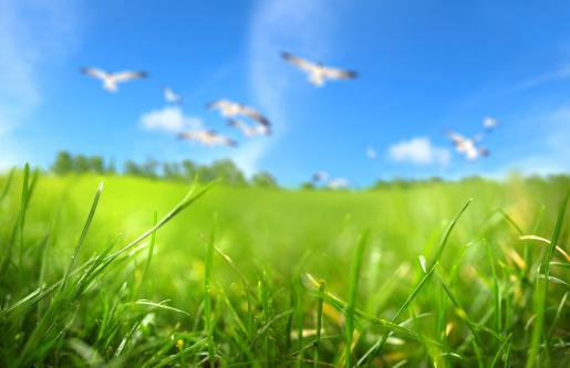 Innocence「green field」:スマホ壁紙(10)
