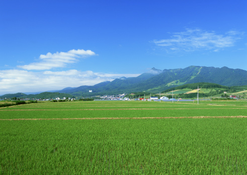 Farm「Green field」:スマホ壁紙(19)