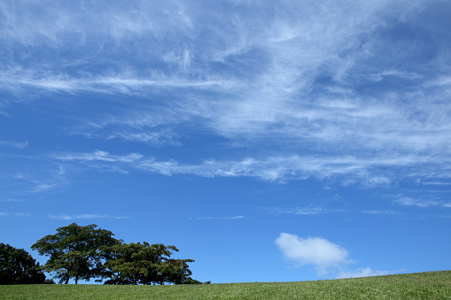 Hill「Green field and white clouds on blue sky」:スマホ壁紙(12)