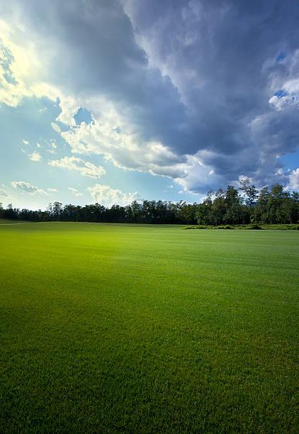 Green field:スマホ壁紙(壁紙.com)