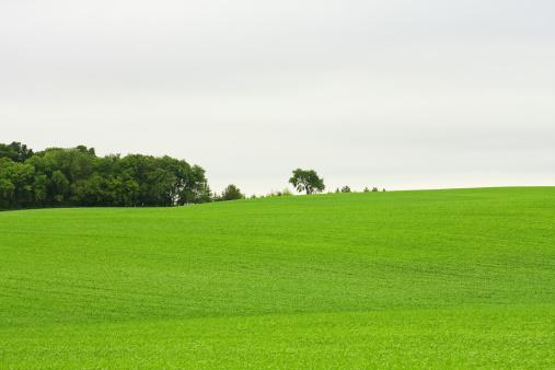 Woodland「Green Field」:スマホ壁紙(16)