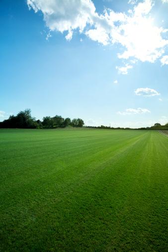 Copse「Green field」:スマホ壁紙(8)