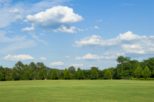 Lawn「Green field with trees and sky in the background」:スマホ壁紙(18)