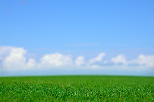 Pasture「Green field and blue sky」:スマホ壁紙(16)