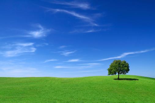 新鮮「グリーンフィールド、lonely tree」:スマホ壁紙(16)