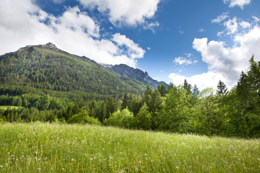 Wilderness Area「Green field in the mountains」:スマホ壁紙(3)