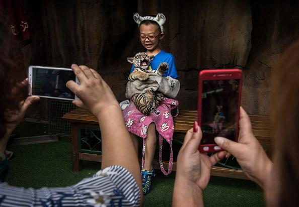 Wilderness Area「China's Siberian Tiger Farm」:写真・画像(14)[壁紙.com]