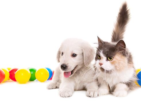 Cat「two buddies」:スマホ壁紙(7)