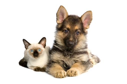 Kitten「two buddies」:スマホ壁紙(0)