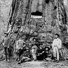 スタニスラウス国有林壁紙の画像(壁紙.com)