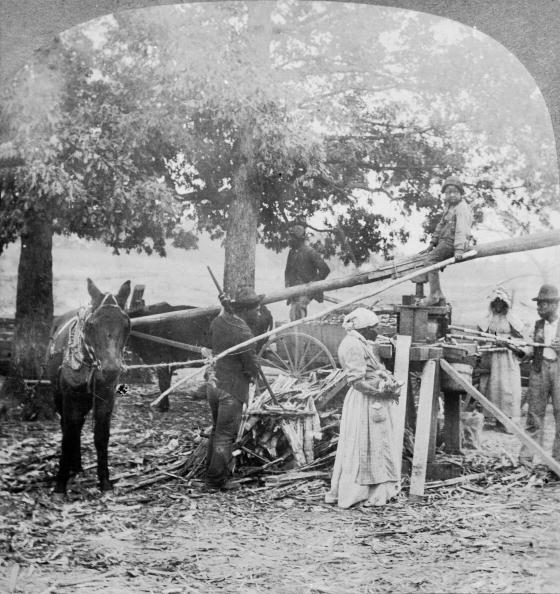 Sugar Cane「Grinding Sugar In Georgia」:写真・画像(4)[壁紙.com]