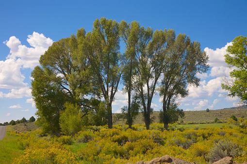 Flower「Yellow desert flowers and arc of trees」:スマホ壁紙(6)