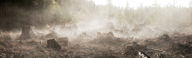Lumber Industry「Moisture in the newly exposed soil rises as steam from a recent clearcut on the Olympic Peninsula, Washington.」:スマホ壁紙(14)