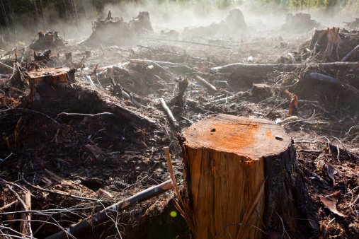 Deforestation「Moisture in the newly exposed soil rises as steam from a recent clearcut on the Olympic Peninsula, Washington.」:スマホ壁紙(8)