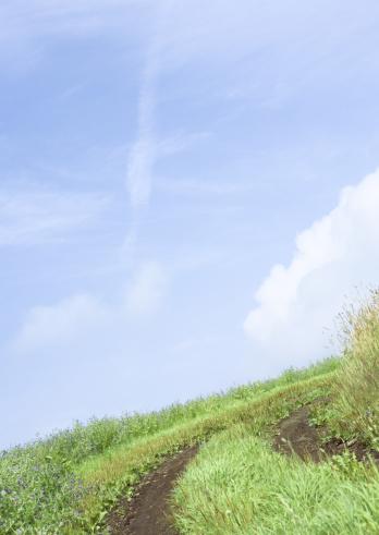 草地「Blue sky and the path in field」:スマホ壁紙(16)