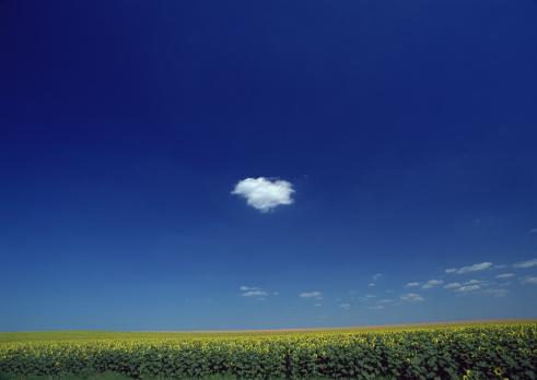 ひまわり「Blue sky and cloud」:スマホ壁紙(5)