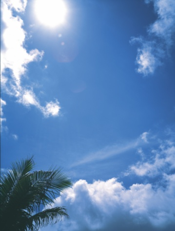 Frond「Blue sky and coconut palm」:スマホ壁紙(16)