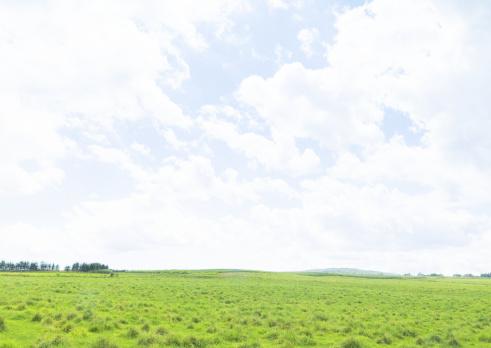 草地「Blue sky and field of grass」:スマホ壁紙(12)