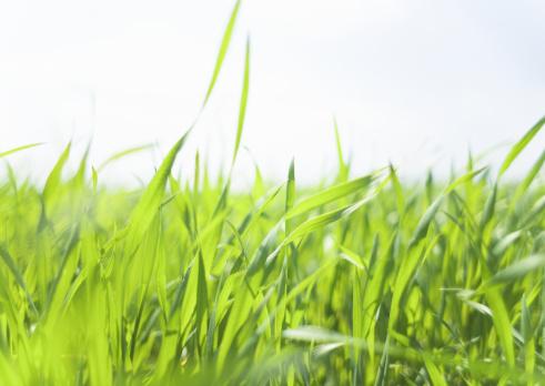 草地「Blue sky and field of grass」:スマホ壁紙(13)