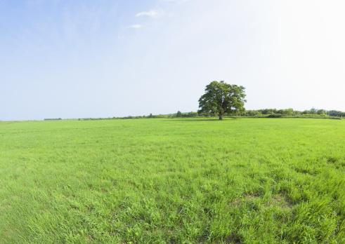 草地「Blue sky and field of grass」:スマホ壁紙(0)