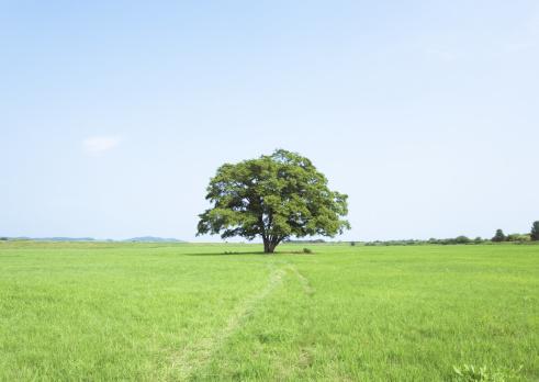 Single Tree「Blue sky and field of grass」:スマホ壁紙(2)