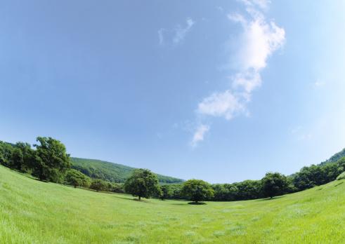 Hokkaido「Blue sky and field of grass」:スマホ壁紙(12)
