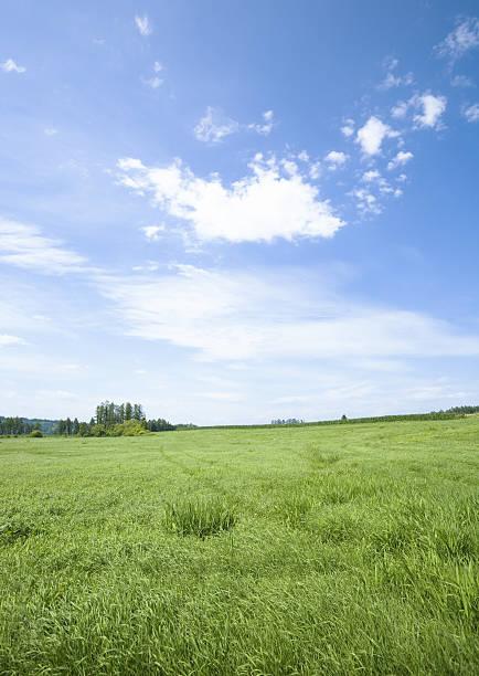 Blue sky and the field of grass:スマホ壁紙(壁紙.com)