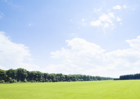 Lawn「Blue sky and lawn」:スマホ壁紙(1)