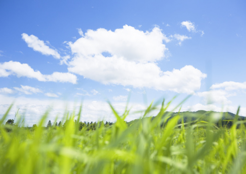 草地「Blue sky and wild grass」:スマホ壁紙(17)