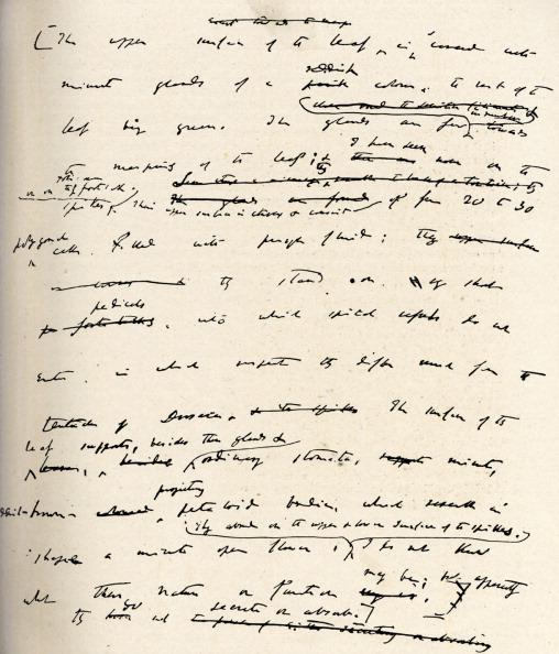 Manuscript「Charles Robert Darwin -」:写真・画像(5)[壁紙.com]