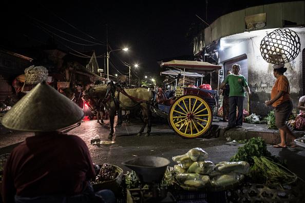 文化「The Vanishing Dokar Of Denpasar」:写真・画像(12)[壁紙.com]
