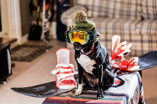 snow board「Dog wearing ski goggles and hat beside snowboard」:スマホ壁紙(16)