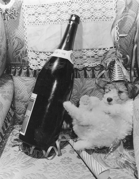 animal「Drunken Dog」:写真・画像(9)[壁紙.com]