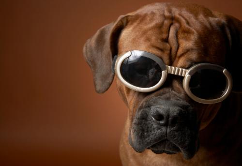 Frowning「Dog wearing sunglasses」:スマホ壁紙(0)