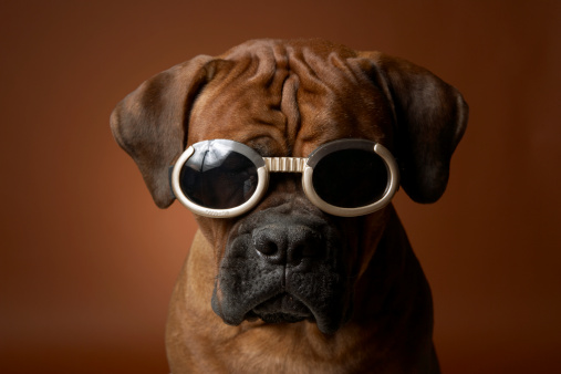 Frowning「Dog wearing sunglasses」:スマホ壁紙(1)